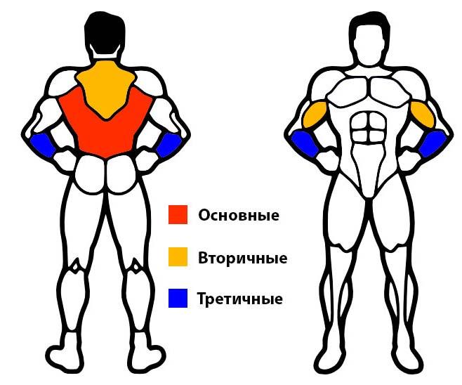 основные мышцы при работе на турнике
