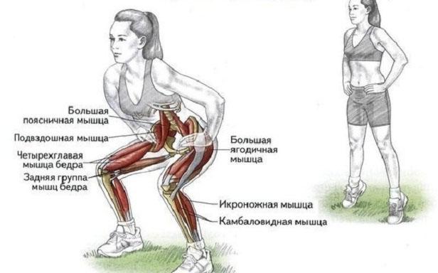 Какие мышцы работают при приседание